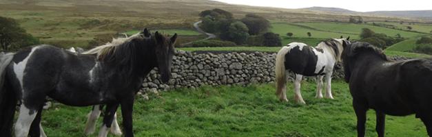 Equine Vet Cumbria